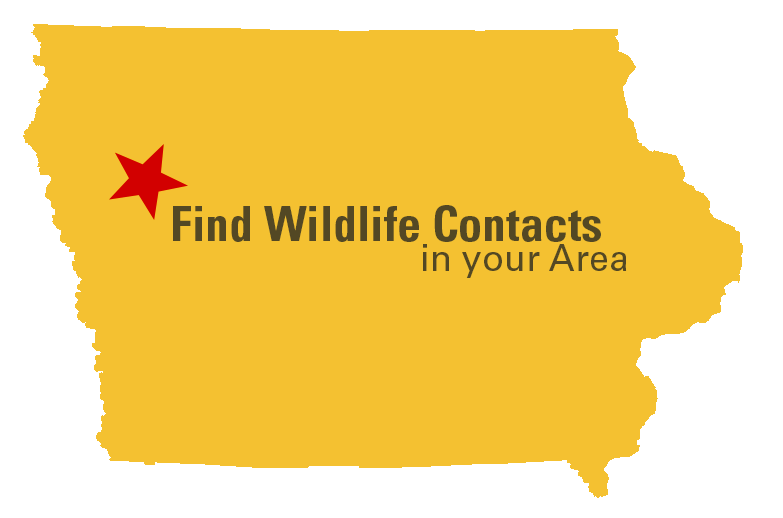 Yellow outline of the state of Iowa with a red star that says Find Wildlife Contacts