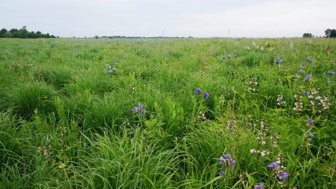 Photo of CRP Pollinator Habitat Prairie Field in Rockford Iowa