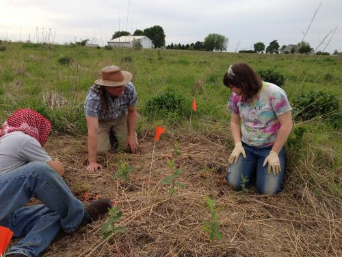 photo of milkweed researchers