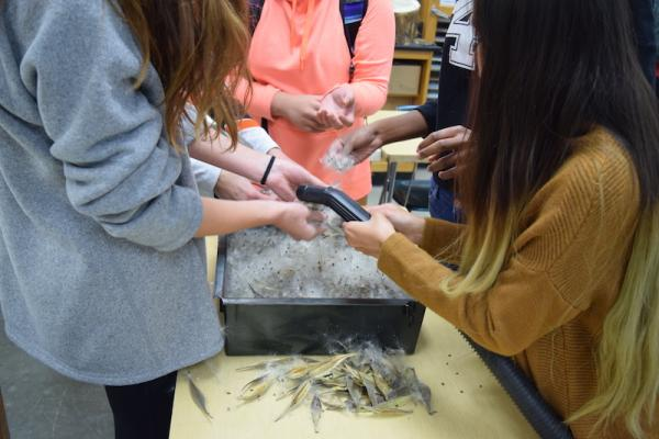 photo of students cleaning butterfly milkweed seed