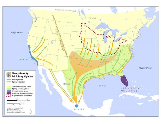 U.S. monarch butterfly migration map