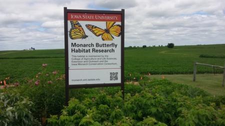 Photo of monarch habitat