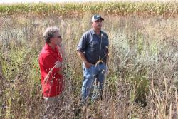 Photo of Steve Bradbury (left), ISU entomology professor, and Wayne Fredericks, Mitchell County farmer, visiting a CP42 pollinator habitat seeding at the edge of Frederick's cornfield last August.