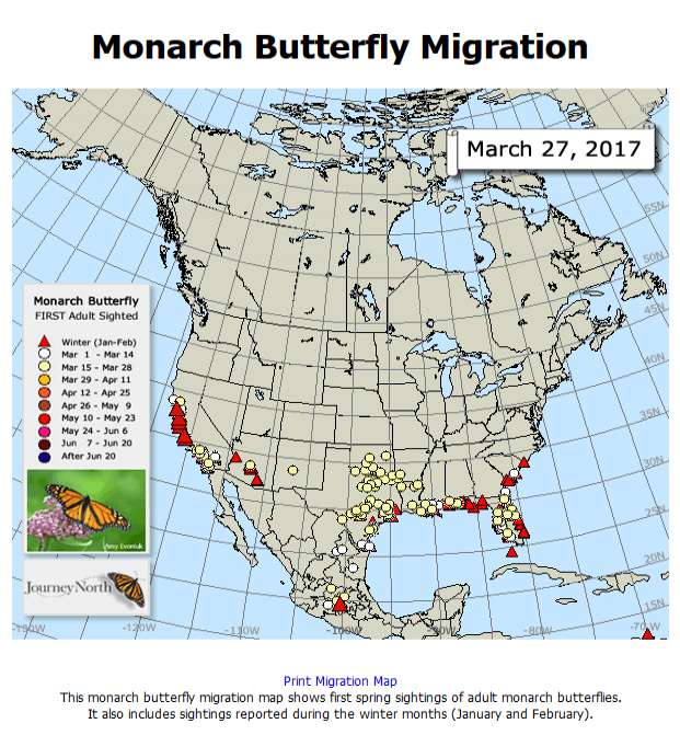 link to animated map of 2017 monarch spring migration from Journey North