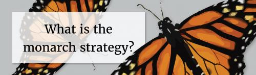 Image for What is the Iowa Monarch Conservation Strategy