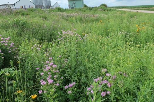 pollinator habitat by a barn