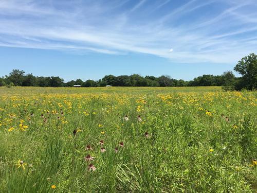 prairie planting 2