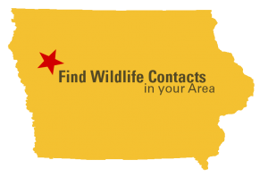 Iowa County monarch planting contact map