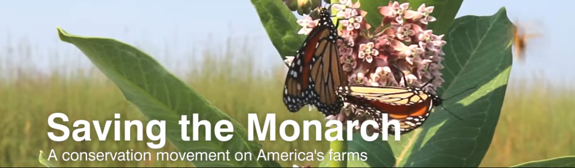 banner image of monarch butterfly on common milkweed